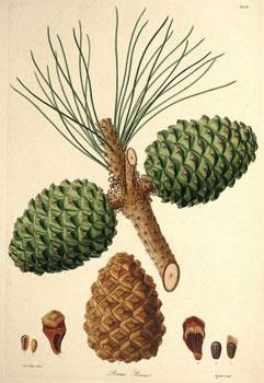 parasol etymologie