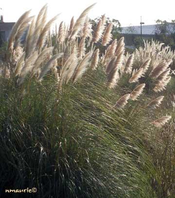 Blanc Et Caf/é 27 Psc pour la d/écoration int/érieure Outil de photographie Phragmites Communis Petite herbe de pampa s/éch/ée D/écor De Mariage