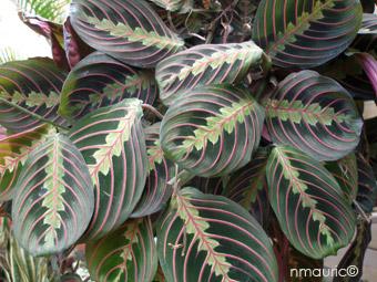 plante verte nervures rouges